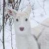 Albinos - December 2017 6