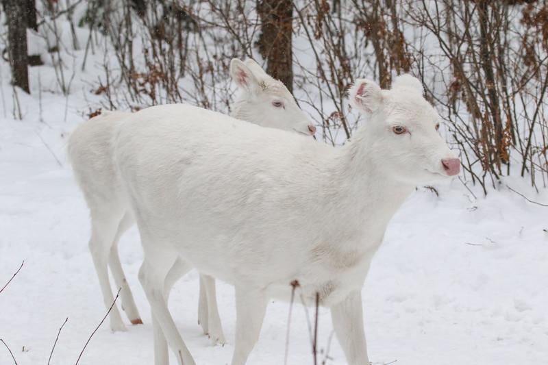 Albinos - December 2017 20