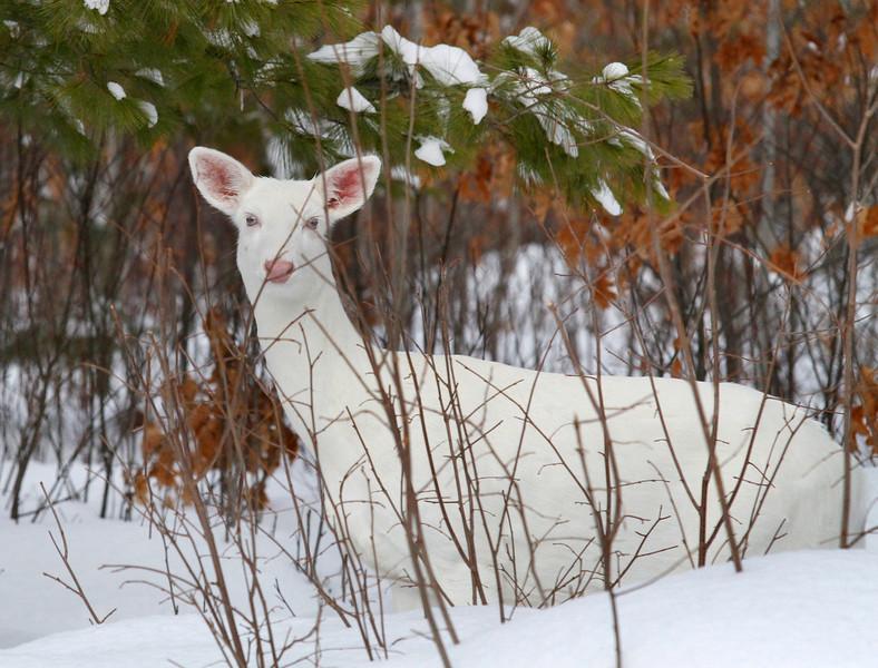 Albino Winter Warriors 6