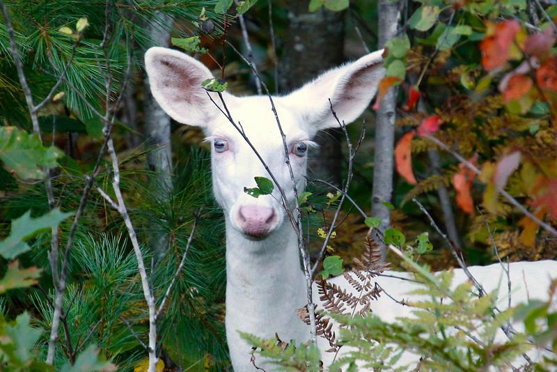 Albino Autumn Portraits