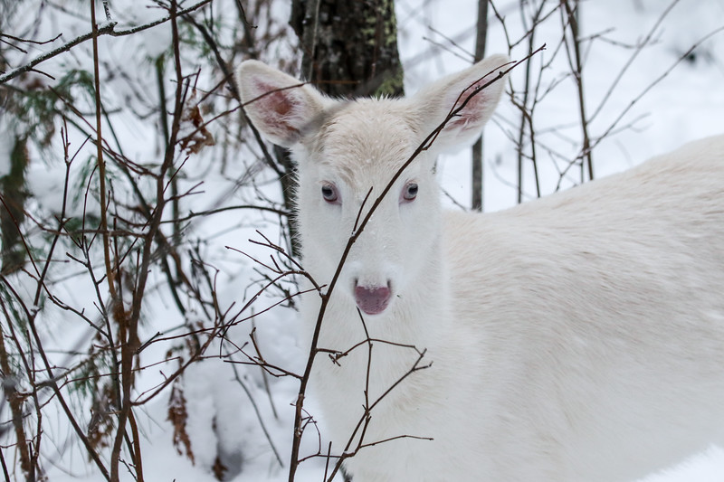 Albinos - December 2017 8