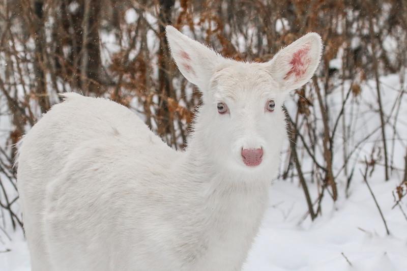 Albinos - December 2017 22