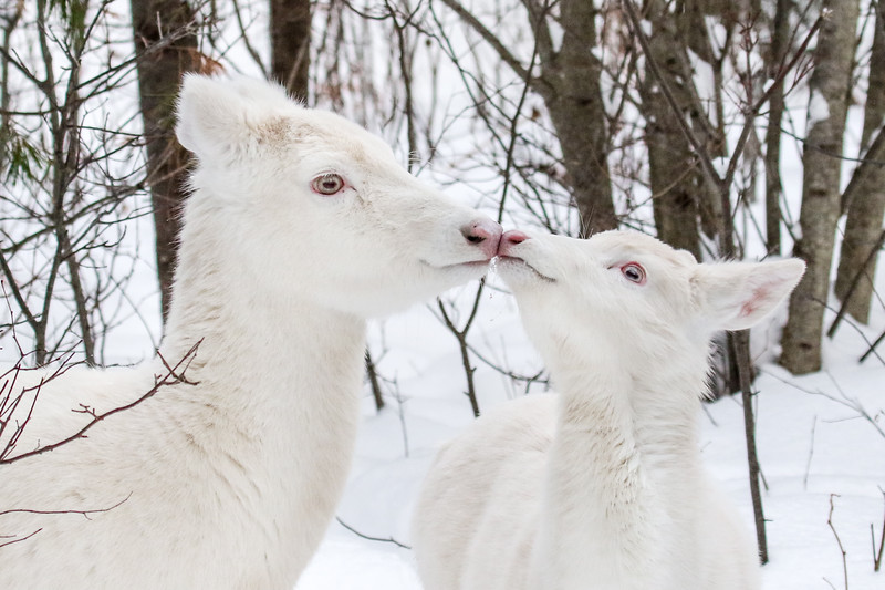 Rubbing Noses  2