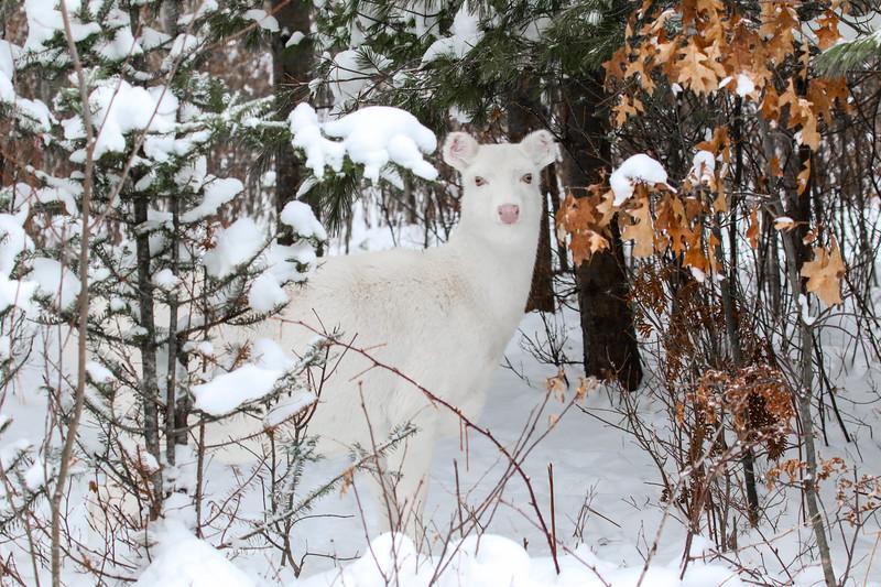 Albinos - December 2017 19