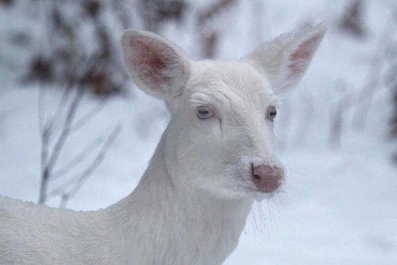Pretty Little Nose 2