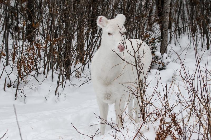 Albinos - December 2017 9