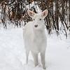 Albinos - December 2017 29