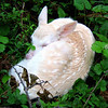 """Baby Albino Whitetail Fawn""  Wild albino deer fawn born on our land in Northern Wisconsin"
