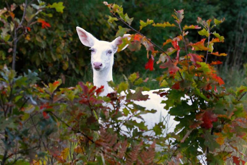 Albino Autumn Portraits 3