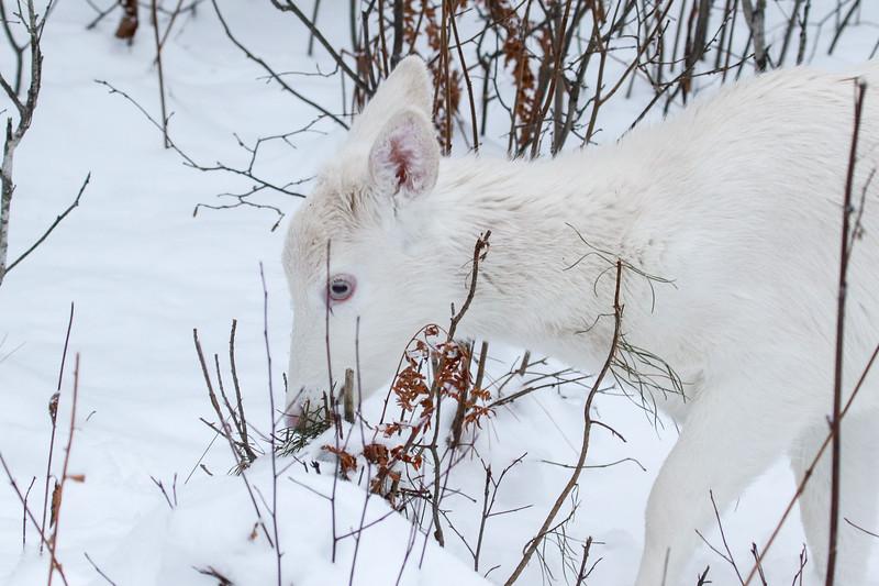 Albinos - December 2017 12