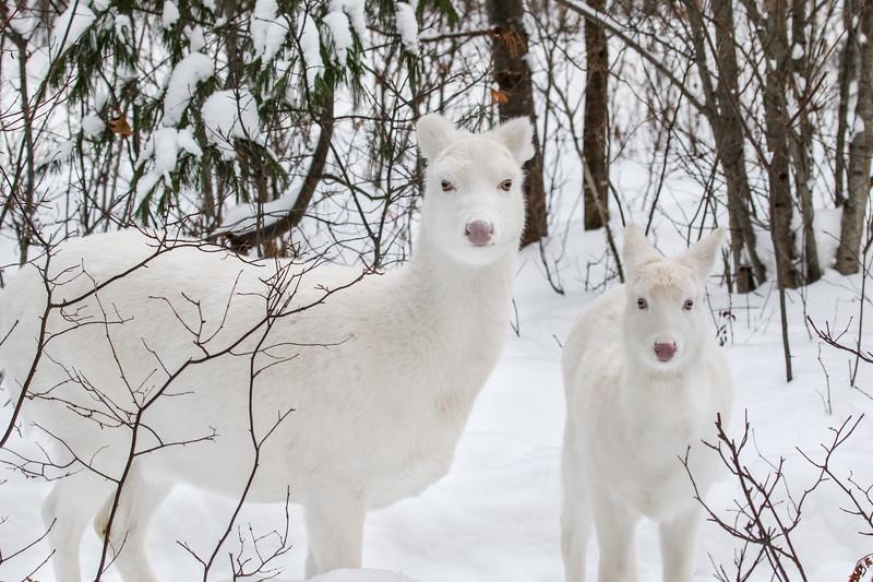Snow Angels  5