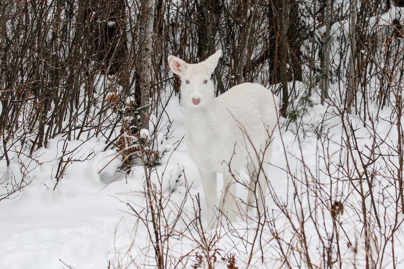 Albinos - December 2017 15