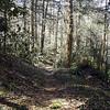 Albright Grove Trail GSMNP