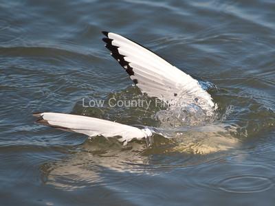 Bird submerged in water