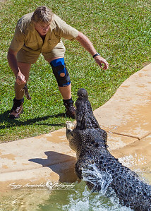Steve Irwin The Crocodile Hunter. Brisbane, Australia April 15, 2006 (several months before he died September 4)