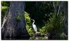 Egret in the sun