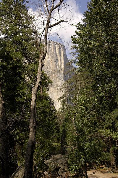 El Capitan ~ Yosemite National Park