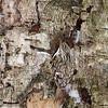 Well hidden Eurasian treecreeper