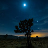 The moon, Venus, and Jupiter frame a Joshua Tree not long after sunset