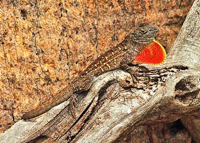 Alligators and Reptiles