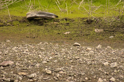 Can you find the Kildeer? (just below center)