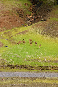 Coming around a bend alongside the very empty Guadalupe Reservoir, we espied a crew of blacktail deer in the depths.