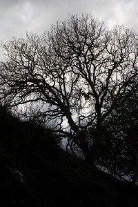 As my fingers gradually froze, I picked one last shot of the threatening sky behind this naked tree.
