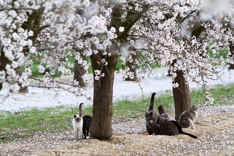 Orchard Kitties