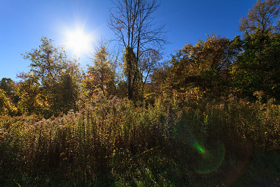 Fall with Lens Flare