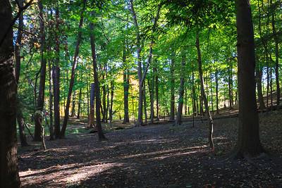 Lambton Woods