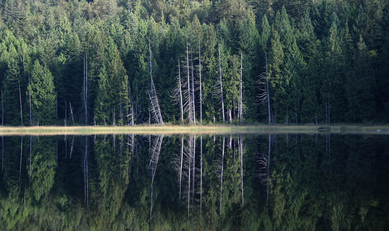 Mike Lake reflection
