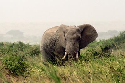 Elephants 002