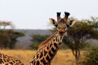 7/30 - Amboseli Safari