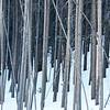 Colorado Toothpicks