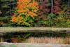 Pond Near Prescott (1)