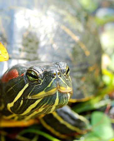 Best of Turtles & Tortoises
