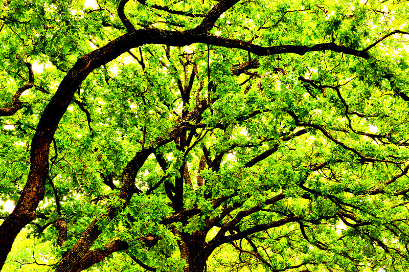 Canopy Contrasts