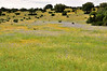 Meadow Magic (1)