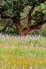Wildflower Layers (2)