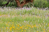 Wildflower Layers (1)