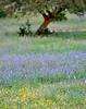 Meadow Magic (2)