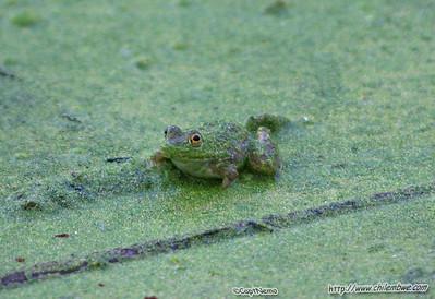 Effie Yeaw, Nature preserve, Sacramento, California.