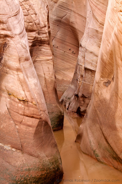 Water fills Zebra Slot Canyon, named for the stripes along the walls, in Grand Staircase-Escalante National Monument area.