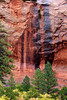 Two lines of desert varnish lead into two ponderosa pines in Kolob Canyon in Zion National Park. Desert Varnish is formed from a variety of minerals seeping into the rock over time.