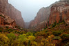 The red rock and fall color of Kolob Canyon seem to glow in misty lighting near Lee Pass Trailhead in Zion National Park.