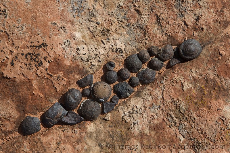 Fulgurites, or rocks that have been struck by lightning, gather in a crack near Zebra Slot in Arizona. The lightning has melted the rocks so that they take on an UFO looking shape.