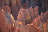 A sapling poderosa pine grows within the hoodoos at Bryce Canyon National Park.