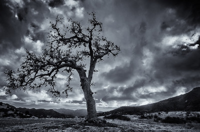 A lone and winded tree