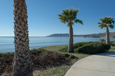 Palm trees along the Pismo Beach coast