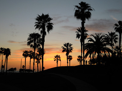 Silhouetted palm trees, Santa Monica, CA